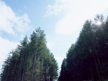 有限会社菊池仏壇店